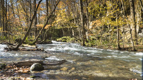 Mysterious Oirase Stream flowing through the autumn forest in To Royalty Free Stock Image