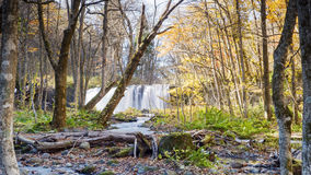 Mysterious Oirase Stream flowing through the autumn forest in To Stock Images