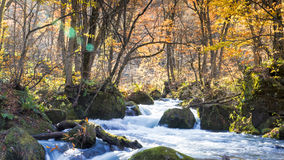Mysterious Oirase Stream flowing through the autumn forest in To Stock Photography