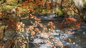 Mysterious Oirase Stream flowing through the autumn forest in To Royalty Free Stock Photography