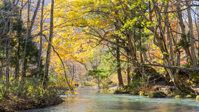 Mysterious Oirase Stream flowing through the autumn forest in To Royalty Free Stock Images