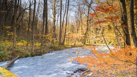 Mysterious Oirase Stream flowing through the autumn forest in To Royalty Free Stock Photos