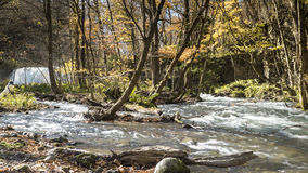 Mysterious Oirase Stream flowing through the autumn forest in To Stock Image