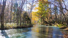 Mysterious Oirase Stream flowing through the autumn forest in To Stock Photos