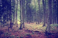 Mysterious path in the forest Royalty Free Stock Images