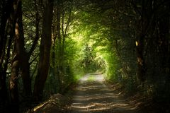 Mysterious path in forest Royalty Free Stock Photo
