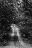 Mysterious Path Royalty Free Stock Photo