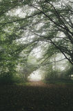 Mysterious path trough the fog in forest stock photo