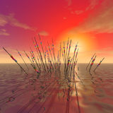 A Mysterious reeds Stock Photos