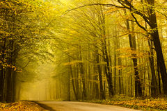 Mysterious road in autumn forest. Road disappearing to the left in the fog in autumn forest stock image