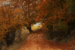 Mysterious road on autumn nature landscape Royalty Free Stock Images
