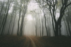 Mysterious road trough the forest Stock Images