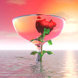 Mysterious rose in a vase Royalty Free Stock Image