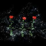 Mysterious roses in a distant galaxy Royalty Free Stock Image