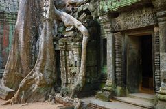 Ta Prohm temple, Angkor Wat, Cambodia. Mysterious ruins of Ta Prohm nestled among rainforest in Angkor, Siem Reap, Cambodia. Angkor is a popular tourist Stock Image