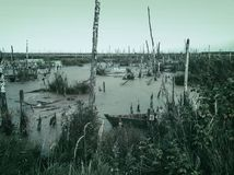 Free Mysterious Scary Empty Uninhabited Swamp With Dead Trees And Old Abandoned Boats. Monochrome Natural Background For Stock Photos - 129459973