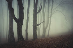 Mysterious scary forest with fog Stock Images