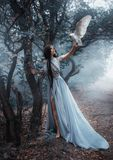 Mysterious sorceress with a bird. Mysterious sorceress in a beautiful blue dress. The background is a cold forest in the fog. Girl with a white owl. Artistic royalty free stock image