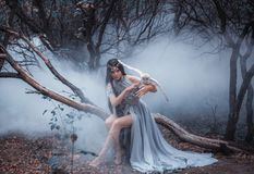 Mysterious sorceress with a bird. Mysterious sorceress in a beautiful blue dress. The background is a cold forest in the fog. Girl with a white owl. Artistic stock photography