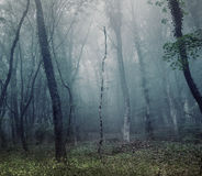Mysterious spring forest in fog. Morning in Crimea Royalty Free Stock Photos