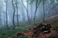 Mysterious spring forest in fog. Morning in Crimea Stock Photos