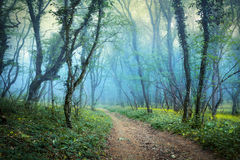 Mysterious spring forest in fog. Morning in Crimea Royalty Free Stock Images