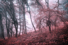 Mysterious spring forest in fog with pink leaves and red flowers Royalty Free Stock Photos