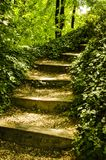 Stairs to somewhere. Mysterious stairs made out of wooden beams and boulder go through the vegetation around Royalty Free Stock Photography