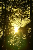 Mysterious sunlight in a dutch forest. Autumn Stock Photography