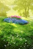Mysterious sunny garden. Spring sunny mysterious garden with tender flower-bed Stock Images