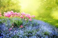 Mysterious sunny garden Stock Photos