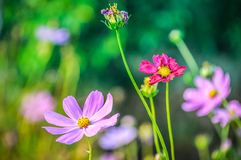 Mysterious sunny garden. Flowers in the mountainous region. Stock Images