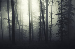 Mysterious surreal forest with fog Stock Images