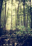 Mysterious swamp forest. Under sunlight in the morning Stock Photography