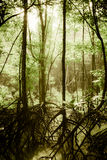 Mysterious swamp forest. Under sunlight in the morning Stock Images