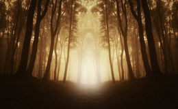 Mysterious symmetrical forest with fog Stock Photography