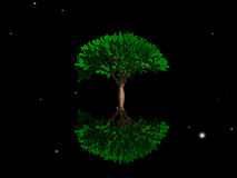 The mysterious symmetrical tree Royalty Free Stock Images