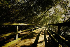 Mysterious Trail. At the Brisbane Park, Australia Royalty Free Stock Photo