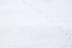Mysterious trail in snow at Japan. Mystery footprint in snow ground at Moerenuma park, Japan Stock Photo