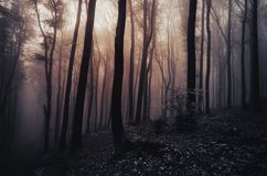 Mysterious Transylvanian forest with fog Royalty Free Stock Images