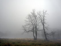 Mysterious tree with fog Stock Photography