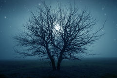 Mysterious tree Royalty Free Stock Photos