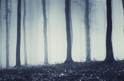 Mysterious trees in a forest with fog. Between strange trees Royalty Free Stock Images