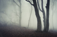 Mysterious trees in Halloween forest Royalty Free Stock Photo