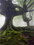 Mysterious and twisted trees Royalty Free Stock Images