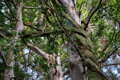 Mysterious and twisted trees with green rootsn royalty free stock photos