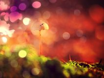 Mysterious wild muschroom in lighting forest. Surreal light. Moss and fairytale mushroom. Flare, soft focus. Mysterious wild muschroom in lighting forest Stock Photo