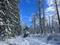 Mysterious winter hike to Brocken on the Goethe-Way in deep snow royalty free stock photos