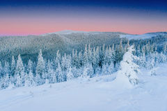 Mysterious winter landscape majestic mountains in . Magical snow covered tree. In anticipation of the holiday. Dramatic Stock Photo