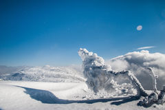 Mysterious winter landscape majestic mountains with snow covered tree. Royalty Free Stock Photo